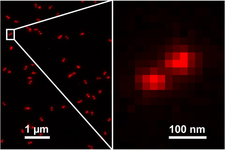 GATTA-STED Nanoruler